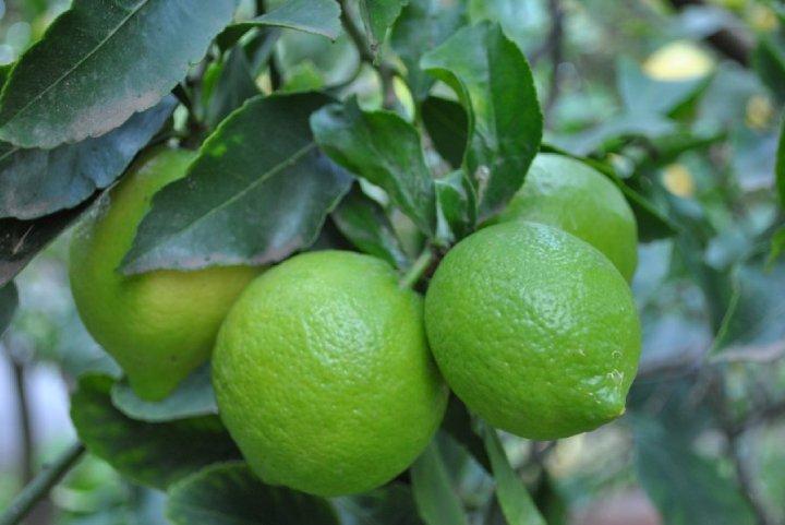 Limoni di Sicilia Detectoare portabile de gaze